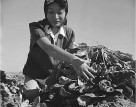 """Gila River Relocation Center, Rivers, Arizona. Momayo Yamamoto in the spinach harvesting field."" (National Archives)"